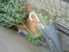 折れた枝と傘